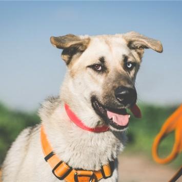 Бит - Собаки в добрые руки