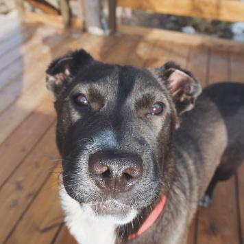 Неви - Собаки в добрые руки