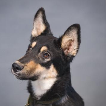 Фердинанд - Собаки в добрые руки