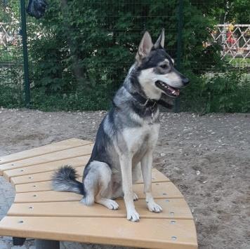 Хлоя - Пропавшие собаки