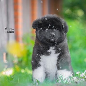 Джоконда - Собаки в добрые руки