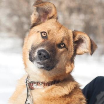 Найда - Собаки в добрые руки