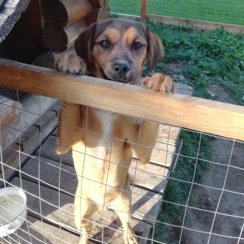 Черныш и Карандаш - Собаки в добрые руки