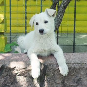 Марли - Собаки в добрые руки