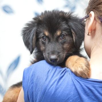 Риччи - Собаки в добрые руки