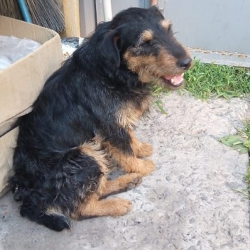 Электроник - Найденные собаки