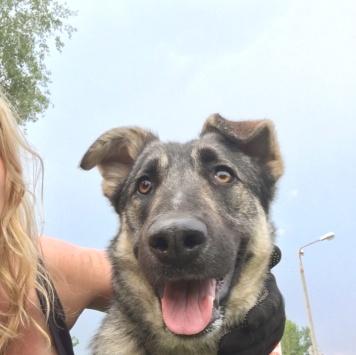 Тэсси - Собаки в добрые руки