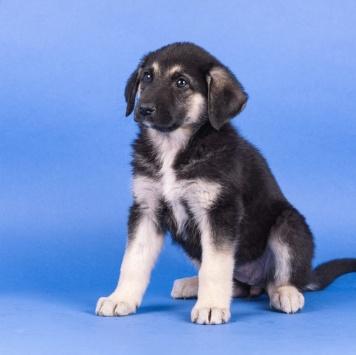 Три_щенка - Собаки в добрые руки