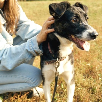 Шикарная Лора - Собаки в добрые руки