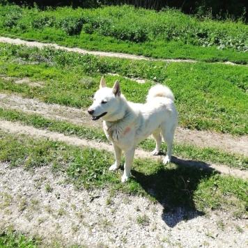 Комо - Собаки в добрые руки