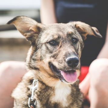 Лотта - Собаки в добрые руки