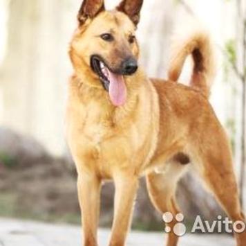 Валдай - Собаки в добрые руки