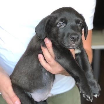 Эрнест - Собаки в добрые руки