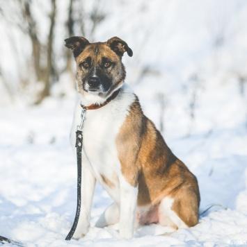 Декстер - Собаки в добрые руки
