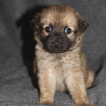 Крош - Собаки в добрые руки