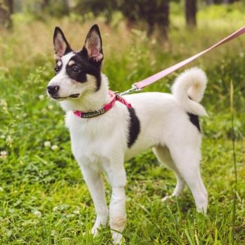 Юнона (Юнька) - Собаки в добрые руки