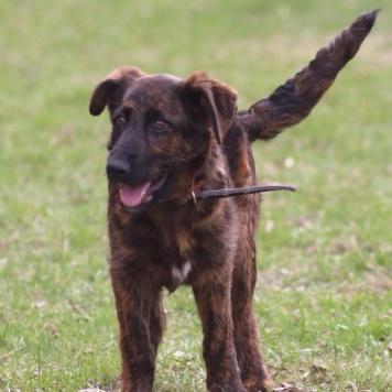 Рина - Собаки в добрые руки