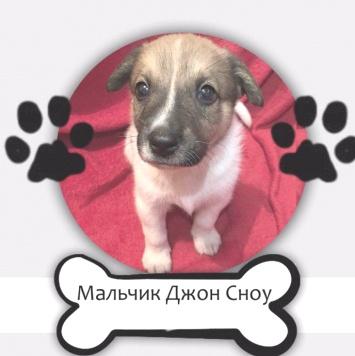 Джон Сноу - Собаки в добрые руки