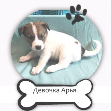 Девочка Арья - Собаки в добрые руки
