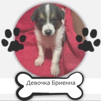 Девочка Бриенна - Собаки в добрые руки