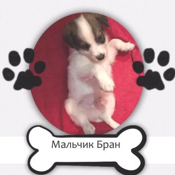 Мальчик Бран - Собаки в добрые руки