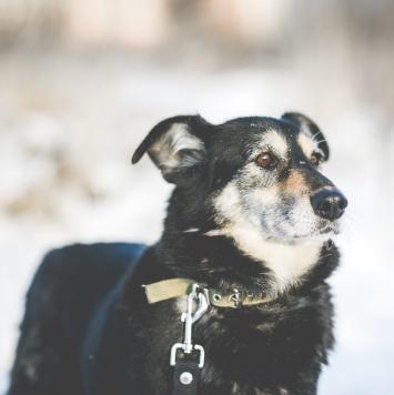 Малдер - Собаки в добрые руки