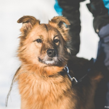 Дэйв - Собаки в добрые руки