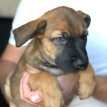 Браун - Собаки в добрые руки