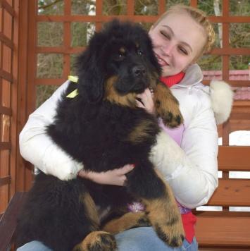 Илона - Собаки в добрые руки
