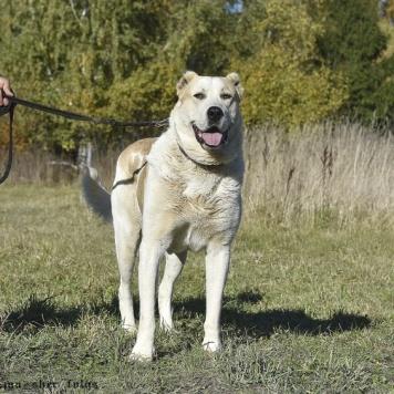 Айрат - Собаки в добрые руки