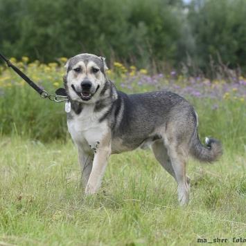 Эдмон - Собаки в добрые руки