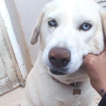 Аэлита - Собаки в добрые руки