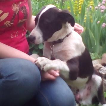 Таш - Собаки в добрые руки