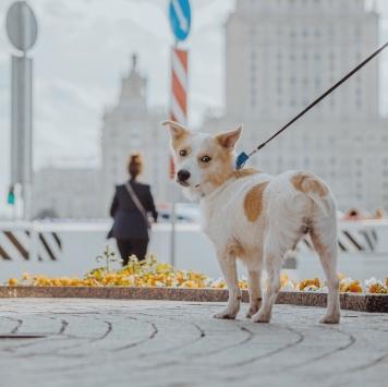 Баксик - Собаки в добрые руки