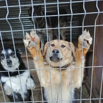 Кабачок (Пеппи) - Собаки в добрые руки