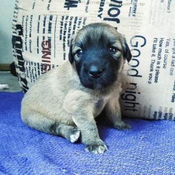 Лапули - Собаки в добрые руки