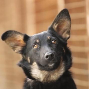 Щенок Молли - Собаки в добрые руки