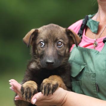 Щенок Мишелька - Собаки в добрые руки