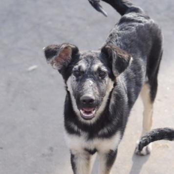 Букет - Собаки в добрые руки