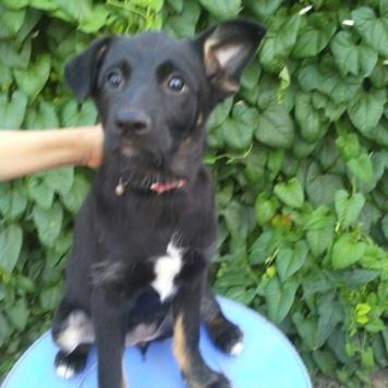 Девочка щенок - Собаки в добрые руки