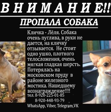 Леля - Пропавшие собаки