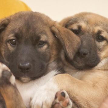 Вилли и Винки - Собаки в добрые руки