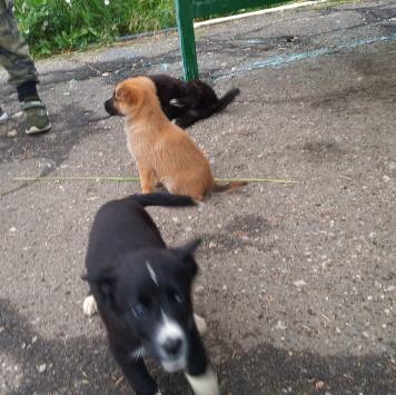 Друг - Собаки в добрые руки