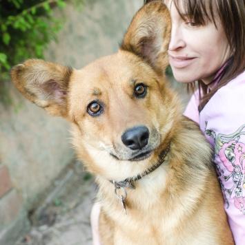 Скифыч - Собаки в добрые руки