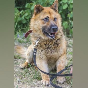 Дружок - Найденные собаки