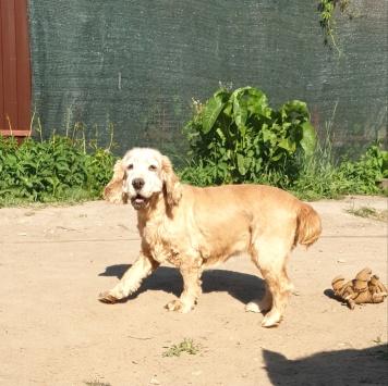 Линда - Собаки в добрые руки