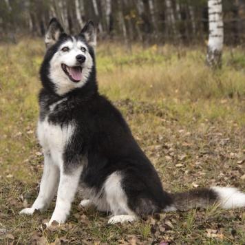 Нарния - Собаки в добрые руки