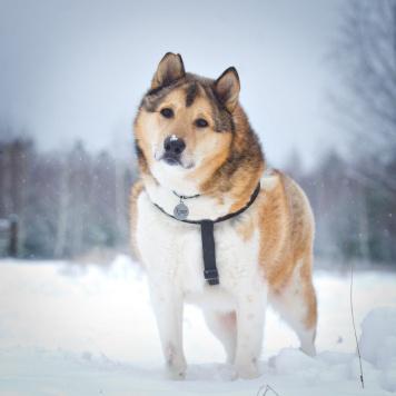 Купер - Собаки в добрые руки