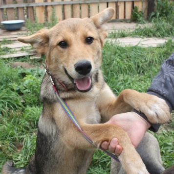 Шурочка - Собаки в добрые руки