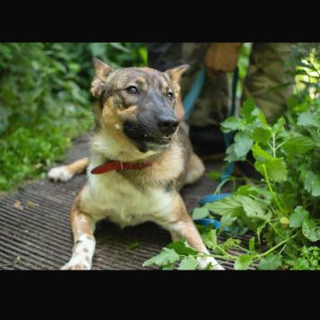 Пашка - Собаки в добрые руки